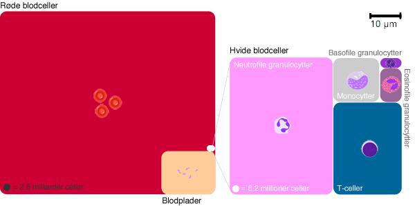 Blodets komponenter