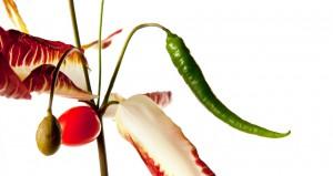 En middags plante - indeholder alle ingredienserne til en et bredt og godt økologisk måltid!