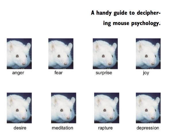En guide til at aflæse den mentale tilstand af mus