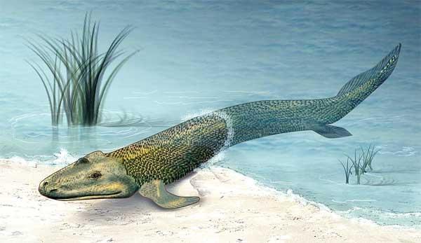 Taktaalik, den første fisk der gik på land