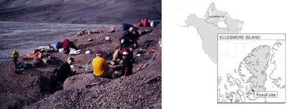 På et videnskabeligt hunch, besluttede gruppen sig for at lede efter det evolutionære bindeled i nord Canada.